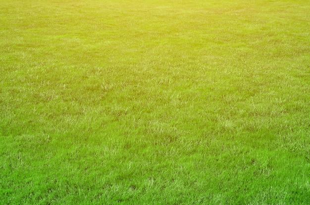 Foto do local com grama verde cortada. gramado ou beco da relva verde fresca