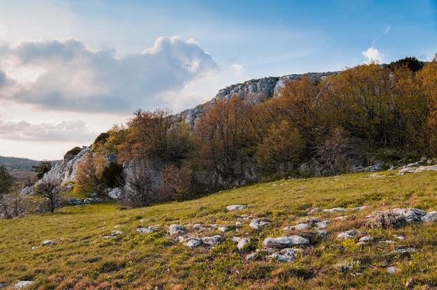 Foto do topo da montanha ai-petri, árvore cresce na rocha, lindo horizonte e céu azul com nuvens brancas