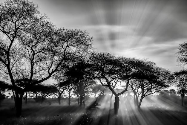 Foto em escala de cinza das árvores nas planícies da savana durante o pôr do sol