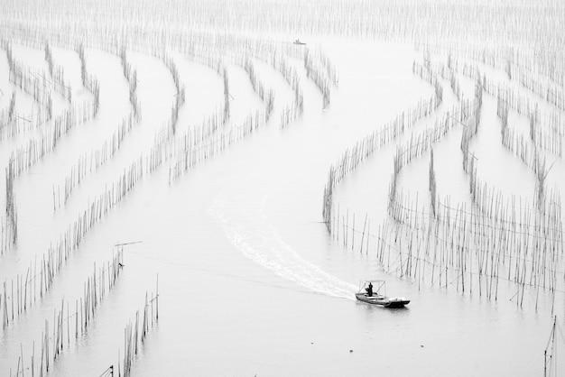 Foto em escala de cinza de algas secas em postes de bambu na costa