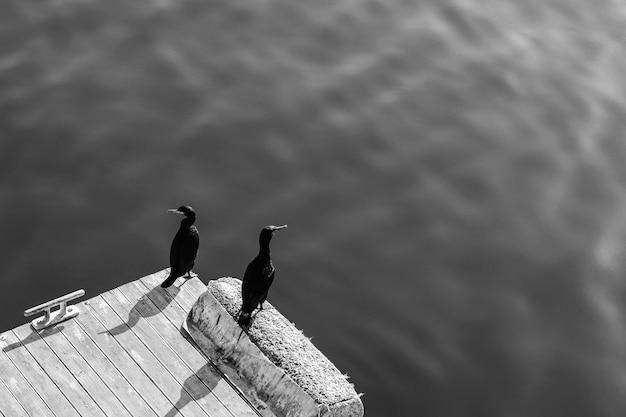 Foto em escala de cinza de alto ângulo de duas aves marinhas pretas sentadas no píer de madeira perto da água
