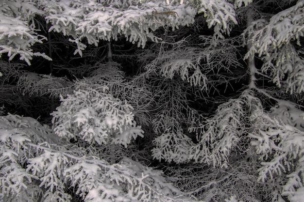 Foto em escala de cinza de árvores cobertas de neve no inverno