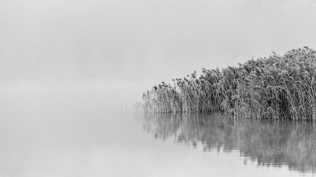Foto em escala de cinza de árvores nevadas perto do lago com reflexos na água em um dia de nevoeiro