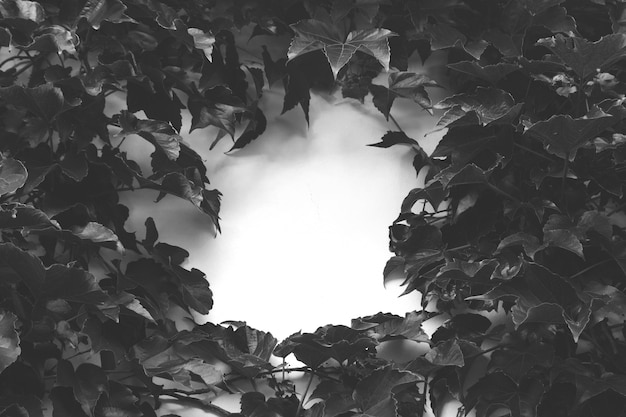 Foto em escala de cinza de folhas em alto ângulo em uma superfície branca