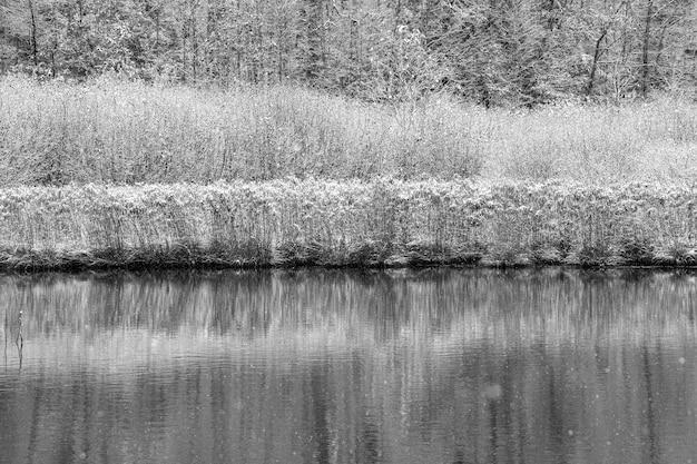 Foto em escala de cinza de plantas cobertas de neve perto da água