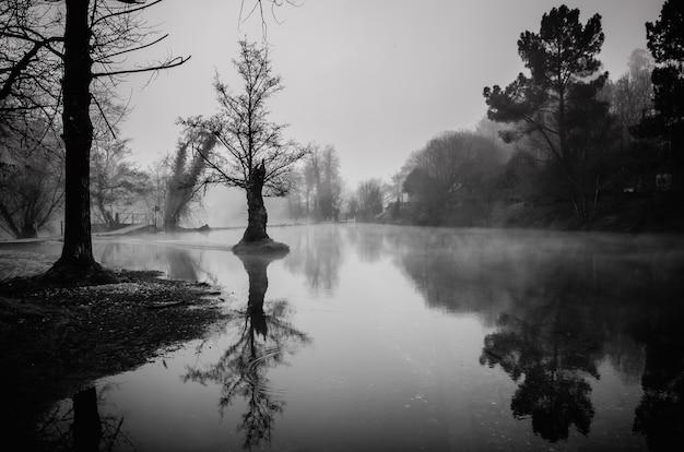 Foto em escala de cinza de um lago rodeado por árvores na galiza