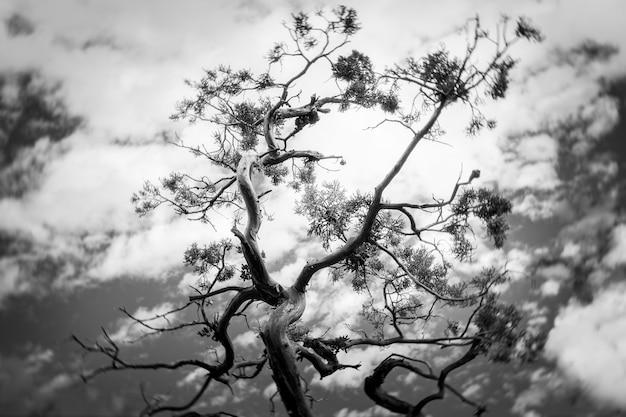 Foto em escala de cinza de uma árvore sob um céu nublado