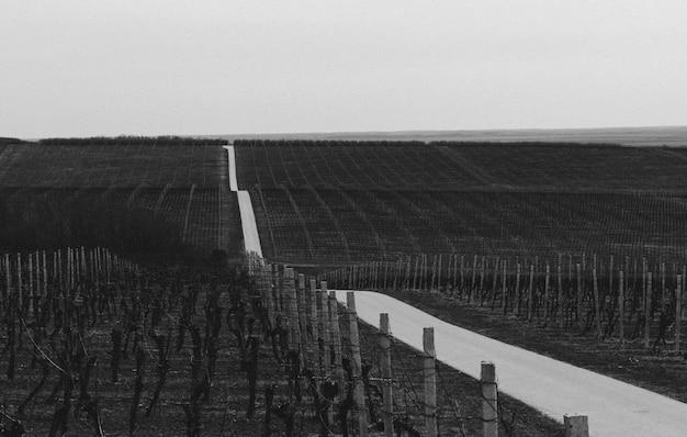 Foto em escala de cinza de uma estrada através dos campos de vinhedos