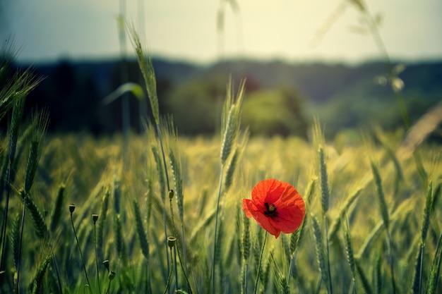 Foto em foco raso de flor vermelha