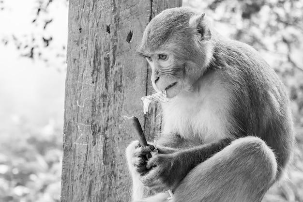 Foto em grande escala em tons de cinza de macaco primata rhesus sentado em uma grade de metal