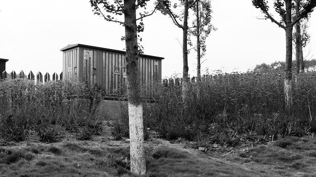 Foto em preto e branco de uma construção de madeira e árvores