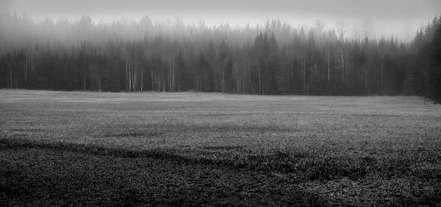 Foto em preto e branco de uma floresta durante o nevoeiro