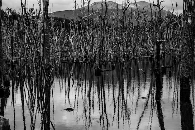 Foto em tons de cinza de árvores refletindo no lago ushuaia, na patagônia, argentina