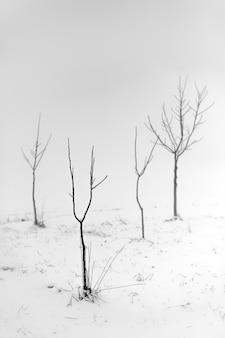 Foto em tons de cinza de árvores sem folhas em uma área de neve com um fundo nebuloso