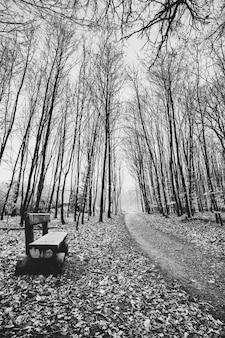 Foto em tons de cinza de um caminho na floresta