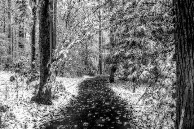Foto em tons de cinza de um caminho no meio de um bosque nevado