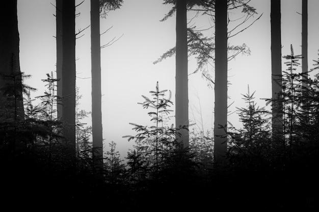 Foto em tons de cinza de um cenário de floresta deprimente com árvores altas
