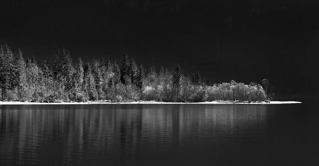 Foto em tons de cinza de um lago cercado por uma floresta à noite