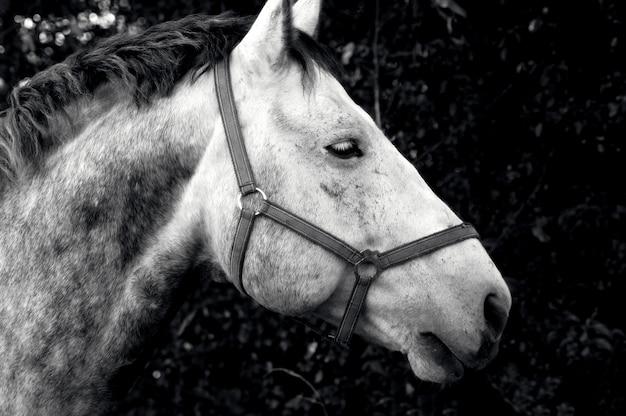 Foto em tons de cinza de um lindo cavalo em um campo