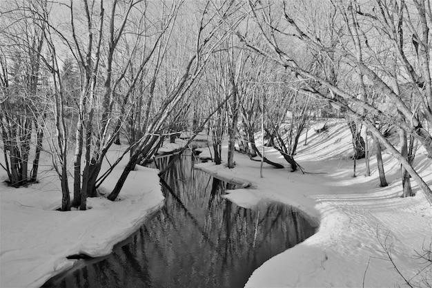 Foto em tons de cinza de um rio congelado no parque com árvores nuas