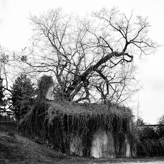Foto em tons de cinza de uma casa abandonada com uma árvore morta ao lado