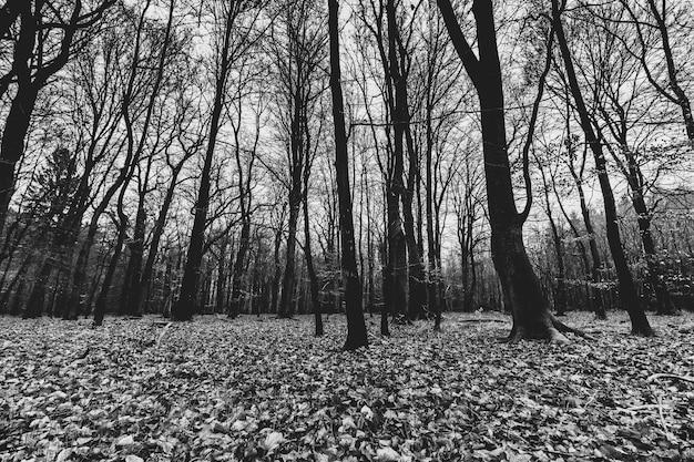 Foto em tons de cinza de uma floresta assustadora