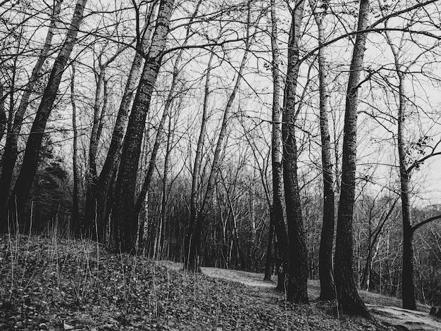 Foto em tons de cinza de uma floresta cheia de árvores nuas no outono