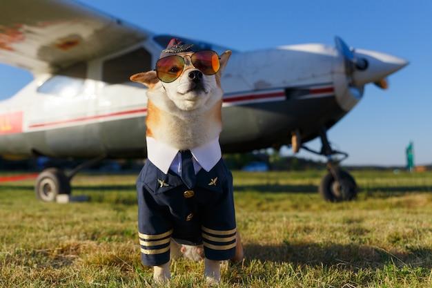 Foto engraçada do cão shiba inu em um traje piloto no aeroporto