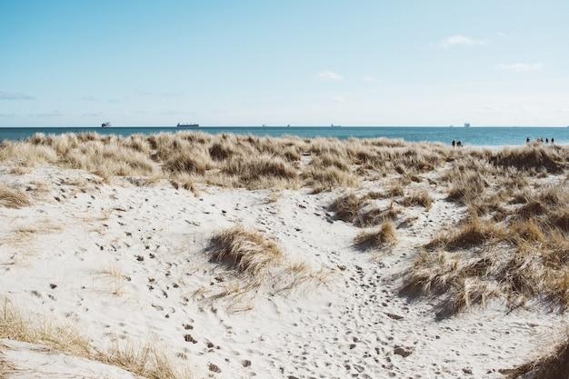 Foto grande angular da costa cercada por grama seca sob um céu azul