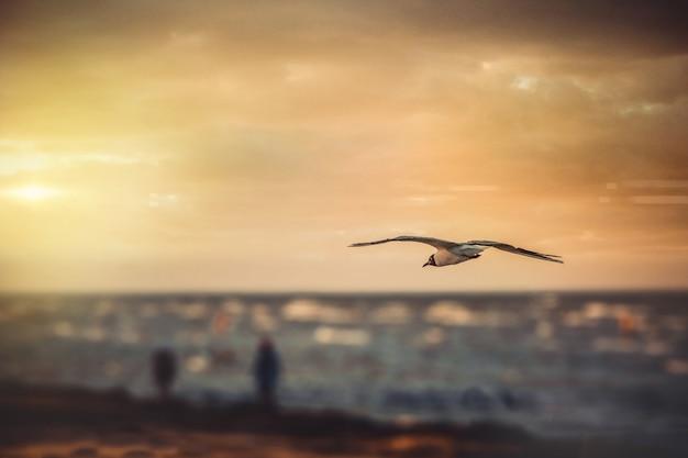 Foto grande angular de um pássaro voando sobre a água durante o pôr do sol