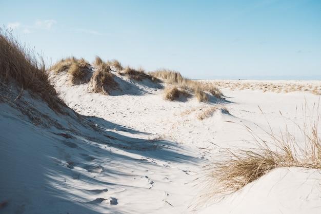 Foto grande angular de uma paisagem feita de areia e plantas secas