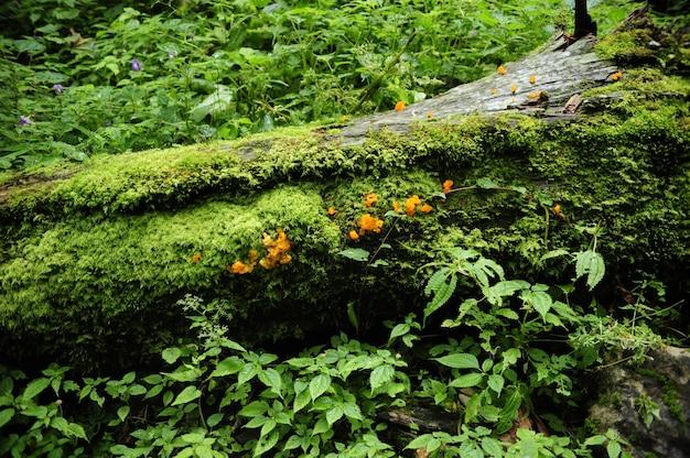 Foto hipnotizante das misteriosas florestas vibrantes do nepal