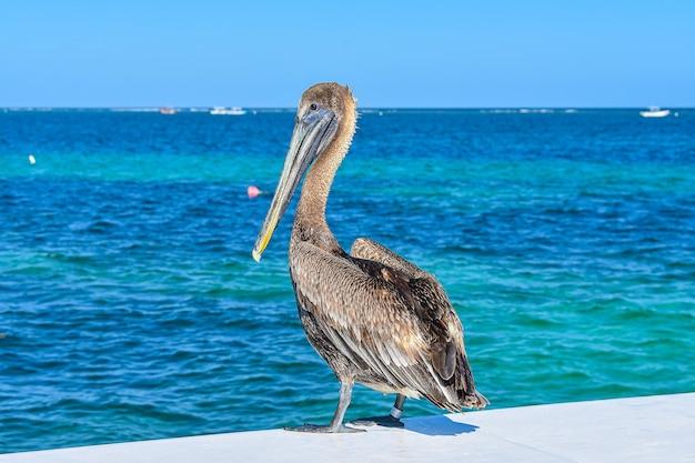 Foto hipnotizante de uma bela paisagem marinha com um pelicano em primeiro plano