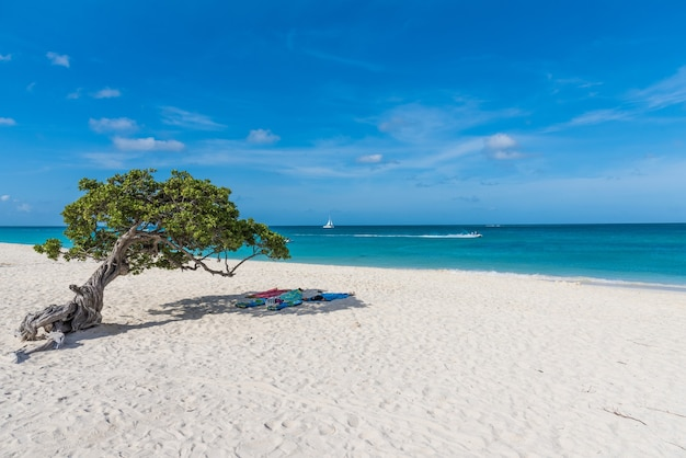 Foto horizontal da vista da praia e do mar, com toalhas dispostas sob uma árvore em aruba
