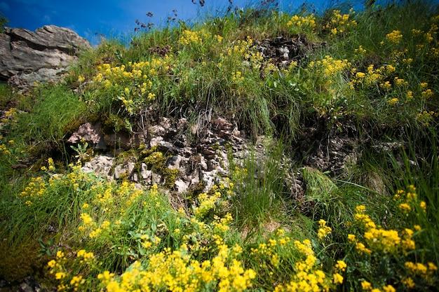 Foto horizontal de flores amarelas na montanha Foto Premium