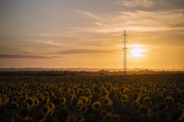 Foto horizontal de um lindo campo de girassóis ao pôr do sol