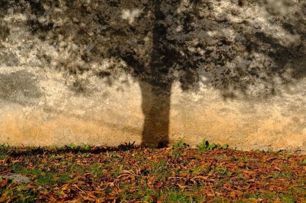Foto impressionante da sombra de uma árvore na parede de um prédio com folhas secas e grama ao redor