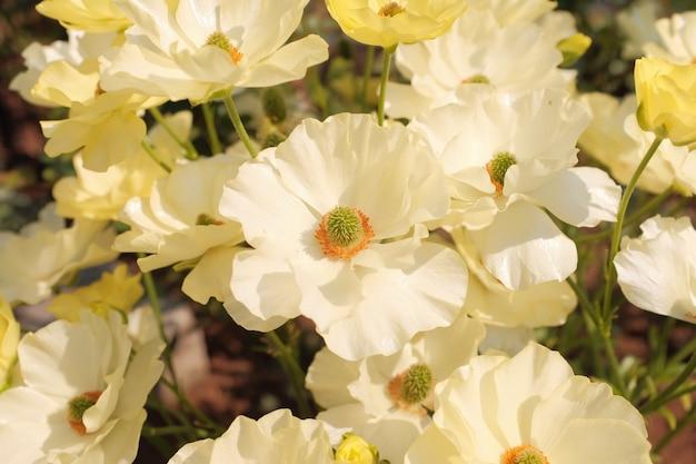 Foto incrível de close-up de uma linda flor