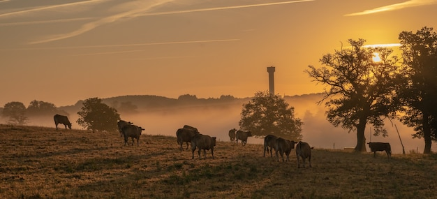 Foto incrível de uma fazenda com vacas ao pôr do sol