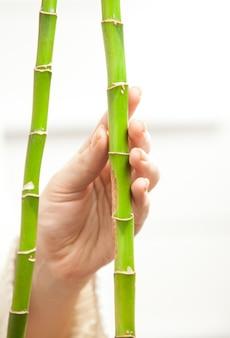 Foto isolada de uma mão tocando jovens bambus com ternura