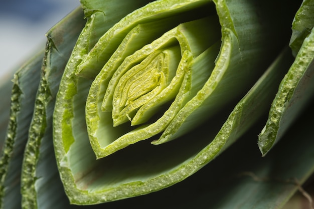 Foto macro da planta fatiada de aloe vera