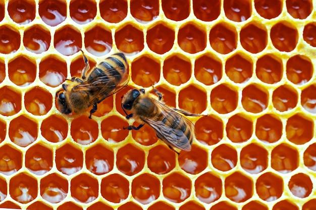 Foto macro de abelhas trabalhando em favos de mel.