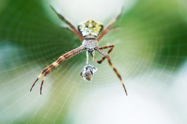 Foto macro de aranha em sua teia