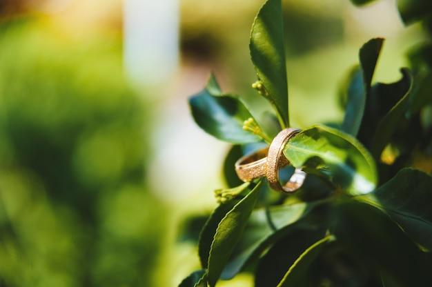 Foto macro de dois anéis de casamento em uma folha com espaço de cópia.