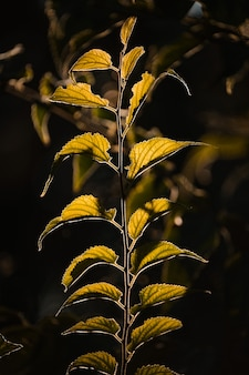 Foto macro de folhas verdes em um fundo escuro