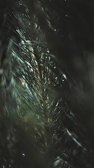 Foto macro de galho de pinheiro