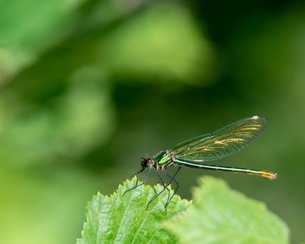 Foto macro de libélula em uma folha sob a luz