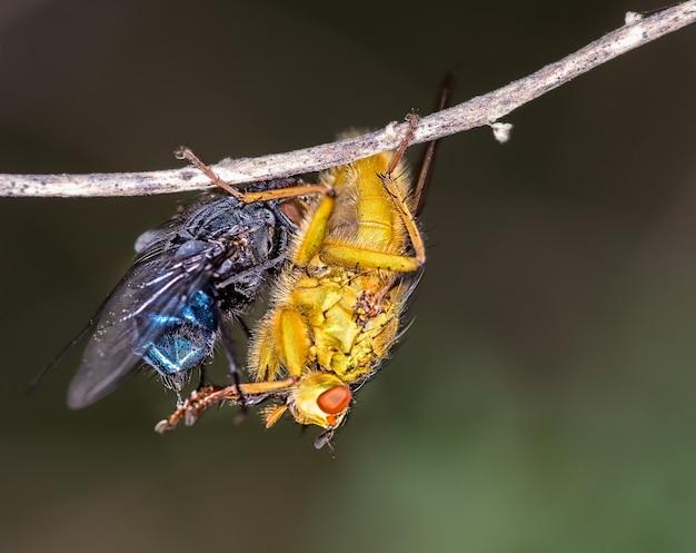 Foto macro de moscas em um galho