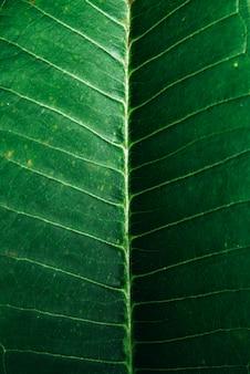 Foto macro de um padrão de veias de folha