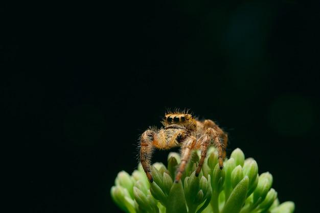 Foto macro de uma aranha em uma planta verde em fundo preto